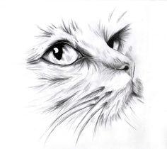 STRAGAN NA SŁOWIAŃSKIEJ: grafika na bawełnie - koty