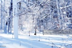 Stock Photo : Decorative keys hanging from tree branches in winter