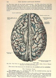 Veins of the Brain 1933 Human Anatomy Illustration p726