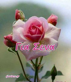 giortazo.gr: Κάρτες Αγάπης Love Cards .. giortazo.gr