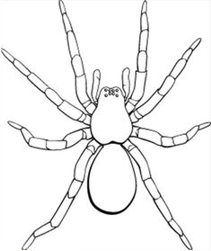 Picture Of Tarantula Coloring Page : Color Luna Insect Coloring Pages, Spider Coloring Page, Animal Coloring Pages, Colouring Pages, Coloring Books, Tarantula Drawing, Desert Crafts, Spider Art, Batik Art