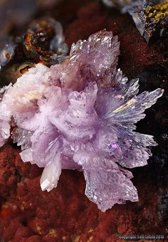 Strengite is a healing stone for the heat chakra. Combine it with rose quartz for a double blast of love energy. Cool Rocks, Beautiful Rocks, Minerals And Gemstones, Rocks And Minerals, Natural Crystals, Stones And Crystals, Crystal Magic, All Nature, Mineral Stone