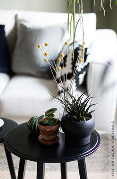 Haal meer groen in je interieur! Speel met diverse vormen en texturen en geef je interieur een originele weelderige toets! SJÄLSLIGT Decoratie, set van 3, 14,99/st. #IKEAxCoffeeklatch #IKEAidee Bring more green into your home! Play with different shapes and textures and give your interior an original touch. SJÄLSLIGT Decoration, set of 3, 14,99/pce. #IKEAxCoffeeklatch #IKEAidea