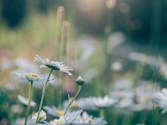 Glücklinks August {flowers on my plate}