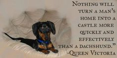 nothing will turn a man's home into a castle more quickly and effectively than a dach. Queen Victoria #dachshund #doxie