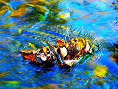 Water Art: Trapped autumn leaves | by peggyhr