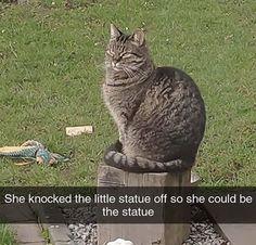 Cat Memes, Dankest Memes, Funny Memes, Cute Animal Memes, Cute Animals, Cats Are Assholes, Cats Doing Funny Things, Friend Memes, Animaux