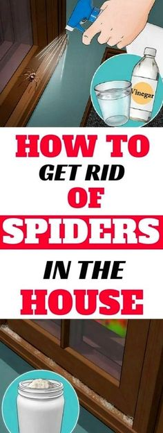 If You Do These Things, You'll Never See Another Spider in Your Kitchen, Bathroom or Bedroom Again  Astounding