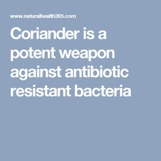 Coriander is a potent weapon against antibiotic resistant bacteria