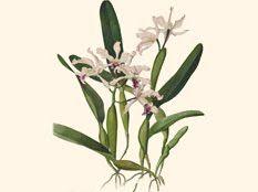 Econexos por Ecomeninas: Exposição das Ilustrações botânicas de Margaret Mee
