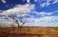 17 February 2015 - Rural agents back foreign investment changes.