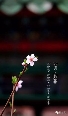 Japanese Background, Art Background, Chinese Culture, Chinese Art, Art Asiatique, Beautiful Places To Visit, Flower Wallpaper, Asian Art, Cool Drawings