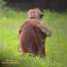 Hug it out. #MonkeyKingdom