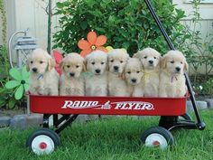 red wagon full of cuties