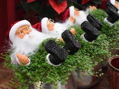 #Bubikopf #Soleirolia #soleirolii #Weihnachtsmann #SantaClaus #Zimmerpflanze #Dekoration #Erlebnisgärtnerei #Hödnerhof #Ebbs #Mils #Dez #Innsbruck #Eigenproduktion #Jungpflanzen #Weihnachten #Winter #DIY #Floristen #Kreativwerkstatt Amaryllis, Winter Diy, Innsbruck, Santa, Poinsettia, Father Christmas, House Plants, Gift Cards, Weihnachten