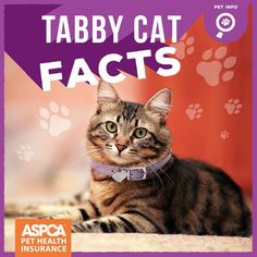 """What is a Tabby cat? """"Tabby"""" is not a breed, but a coat pattern in cats. Its appearance can vary slightly from stripes to whorls, spots, and more."""
