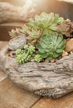 Succulent Planter Diy, Succulent Landscaping, Succulent Gardening, Succulent Arrangements, Container Gardening, Planter Garden, Cacti Garden, Indoor Gardening, Succulents In Containers