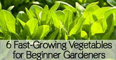 At times, the idea of gardening can be daunting for those of us with less than stellar gardening skills. These 6 fast growing vegetables are sure to give you the jump start you need to...