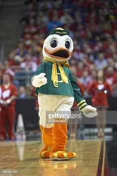 college-basketball-ncaa-playoffs-oregon-ducks-mascot-the-duck-during-picture-id480341421 (407×612) College Cheerleading, College Basketball, University Of Oregon, Oregon Ducks, Fictional Characters, College Basket, Fantasy Characters