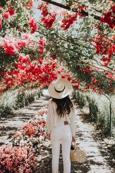 Rose canopy