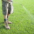 broad leaf spray - pump action sprayer - http://www.buffaloturf.com.au.