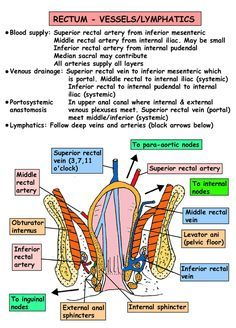Home Page of Anatomy  - Blood Vessles Arteries and Veins Surface anatomy - Vretebral level - Ligaments and Muscles . Basic Anatomy And Physiology, Brain Anatomy, Medical Anatomy, Anatomy Study, Science Notes, Medical Science, Medical School, Medical Students, Intestines Anatomy