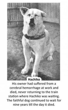 "The very touching movie ""Hachi - a Dog's Tale"" starring Richard Gere was the story of this unbelievable dog.  A MUST see."
