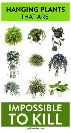 House Plants Decor, Plant Decor, Garden Plants, Succulent Plants, Balcony Hanging Plants, Easy House Plants, Porch Plants, Mint Plants, Types Of Succulents