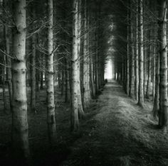 What lurks within the trees? Photographer Colin Campbell notes that whenever he takes this path through the woods in Bruiach, Scotland, a solitary figure seems to wait for him at the end, disappearing as he gets close.
