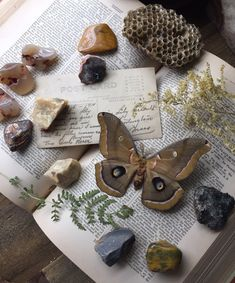 Elements Of Nature, Ivy House, Witch Aesthetic, Nature Journal, What Is Tumblr, Trending Topics, Viera, Vintage Books, Discover Yourself