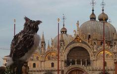 (1) Carnevale di Venezia (@Venice_Carnival)   Twitter Buffy, Italy Tourism, World Travel Guide, Rare Birds, Snowy Owl, Venice, Taj Mahal, Carnival, Digital Art
