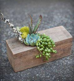 plantes-succulentes-bloc-bois-pot-fleur