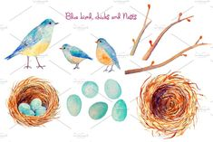 Check out Watercolor Blue Bird Nest Easter Egg by Corner Croft on Creative Market?u=chengjing Watercolor Bird, Watercolor Illustration, Rabbit Art, Creative Sketches, Tree Branches, Blue Bird, Nest, Art Projects, Hand Painted