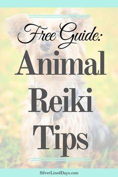 animal reiki, pet reiki, reiki healing for animals, reiki for pets, pet reiki tips, reiki energy healing, reiki tips, reiki for dogs, reiki for cats