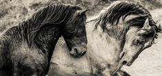 majestic mustangs.  print available.  portion of proceeds to www.returntofreedom.org