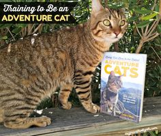 Does your cat prefer the adventurous lifestyle? Going on hikes and big adventures isn't just for the dogs anymore.