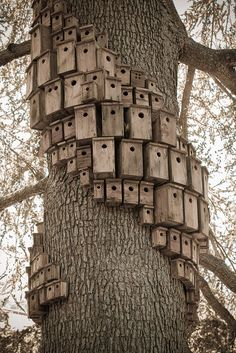 "Birdhouse artwork called ""Control Tower"" by artist Cameron Hockenson. montalvoarts.org/sculpture/ control_tower/ Villa Montalvo, Saratoga, CA"
