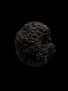 truffle . Trüffel . truffe | Food. Art + Style. Photography: Food on black by Michael Roulier |