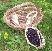 Making a Melon Basket
