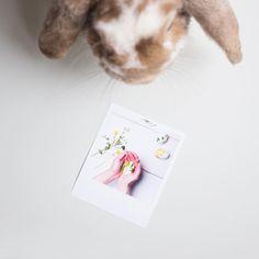 #kralik #vyvolejto #polaroid #photo #photos #rabbit #easter #happyeaster