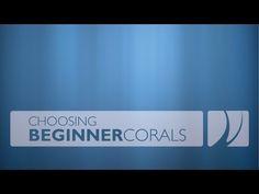 Buy Beginner Coral Tips