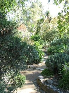 Lost Pathways in William Land Park, Sacramento. My sister worked here. She so loved this place.