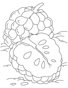 Coloriage Fruits Tropicaux.7 Meilleures Images Du Tableau Chirimoya Exotic Fruit Delicious