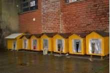 """""""O GRITO DO BICHO"""": Justiça garante permanência das """"casinhas amarelas..."""