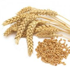 Pšenica Reducing Blood Pressure, Whole Grain Cereals, Sprouting Seeds, Wheat Grass, Friends In Love, Sprouts, At Least, Fresh, Food
