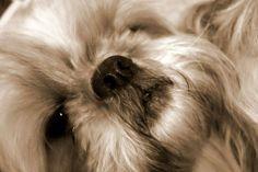My cute little puppy, Yvette (2)