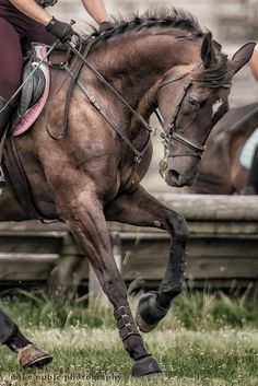Masculine animal brown horse