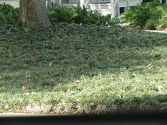 Central Florida Gardener: Common Ground