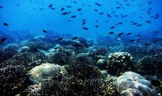 Surviving harsh environments becomes a death-trap for specialist corals