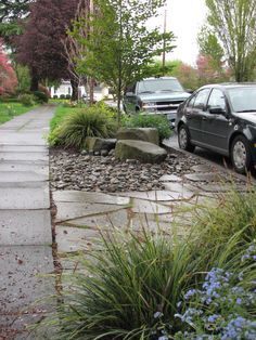 Great landscaping - gardening idea for the hell strip between the sidewalk and the road. :: landscape design by verdant garden nw.